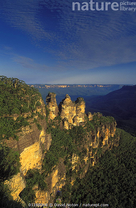 Three Sisters, Blue Mountains, New South Wales, Australia  ,  AUSTRALIA,CLIFFS,LANDSCAPES,ROCK FORMATIONS,TREES,VALLEYS,VERTICAL,Geology,Plants,Europe,WALES  ,  David Noton