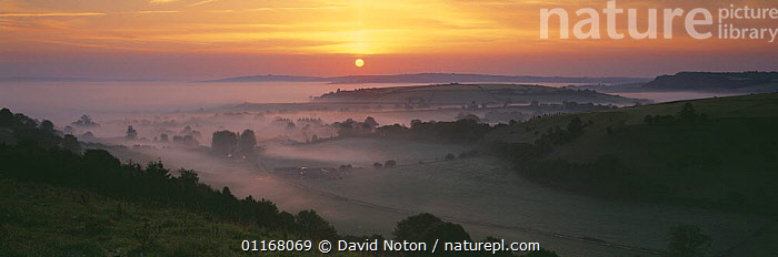 Early moring dawn in the Blackmore Vale, Dorset, England, UK  ,  COUNTRYSIDE,EUROPE,LANDSCAPES,MIST,PANORAMIC,SILHOUETTES,SUN,SUNRISE,SUNSET,TREES,UK,VALE,VALLEYS,United Kingdom,Plants,British,ENGLAND  ,  David Noton