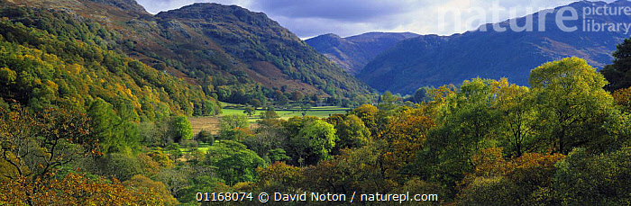 Borrowdale in the autumn, Lake District National Park, Cumbria, England, UK  ,  ATMOSPHERIC,COUNTRYSIDE,EUROPE,HILLS,LANDSCAPES,NP,PANORAMIC,PEACEFUL,TREES,UK,VALLEYS,WOODLANDS,United Kingdom,Concepts,Plants,British,National Park,ENGLAND  ,  David Noton