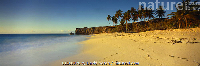 Deserted beach at dawn, Bottom Bay, South East Coast, Barbados  ,  ATLANTIC,BEACHES,CARIBBEAN,COASTS,DAWN,EMPTY,HOLIDAY,ISLANDS,LANDSCAPES,OCEAN,PANORAMIC,PARADISE,PEACEFUL,TREES,WEST INDIES,Concepts,Plants,LESSER ANTILLES  ,  David Noton