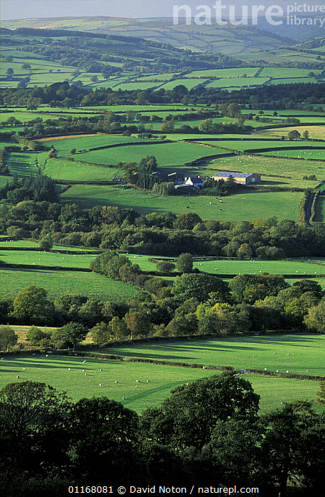 Rolling farmland, fields and hedges nr Brecon Beacons, Powys, Wales, UK  ,  BUILDINGS,COUNTRYSIDE,EUROPE,FARMLAND,FIELDS,HEDGEROWS,LANDSCAPES,SHEEP,TREES,UK,VALLEYS,VERTICAL,United Kingdom,Plants,British,WALES  ,  David Noton