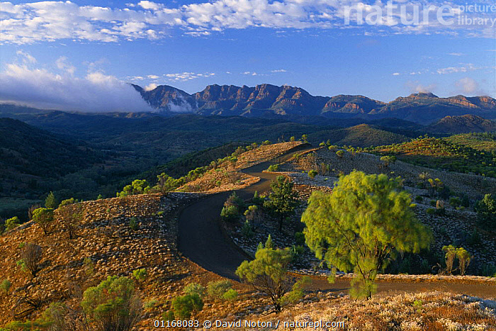 Bunyerro Gorge, Flinders Ranges, South Australia  ,  AUSTRALIA,CLOUDS,COUNTRYSIDE,DRAMATIC,ENVIRONMENT,LANDSCAPES,MOUNTAINS,ROADS,SHRUBS,TREES,Weather,Plants  ,  David Noton