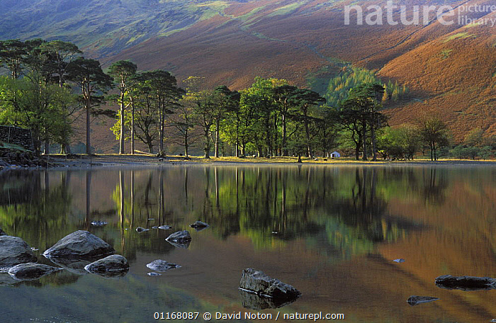 Autumn on Buttermere, Lake District National Park, Cumbria, England, UK  ,  AUTUMN,COUNTRYSIDE,EUROPE,HILLS,LAKES,LANDSCAPES,MOUNTAINS,NP,PEACEFUL,REFLECTIONS,ROCKS,STILL,TREES,UK,WATER,United Kingdom,Concepts,Plants,British,National Park,ENGLAND  ,  David Noton
