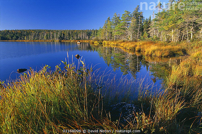 Benjies Lake, Cape Breton Highlands National Park, Nova Scotia, Canada  ,  AUTUMN,BACKCOUNTRY,CANADA,COUNTRYSIDE,FORESTS,LAKES,LANDSCAPES,NATURE,NORTH AMERICA,PEACEFUL,REFLECTIONS,STILL,TREES,WATER,WILDERNESS,WOODLANDS,Concepts,Plants  ,  David Noton