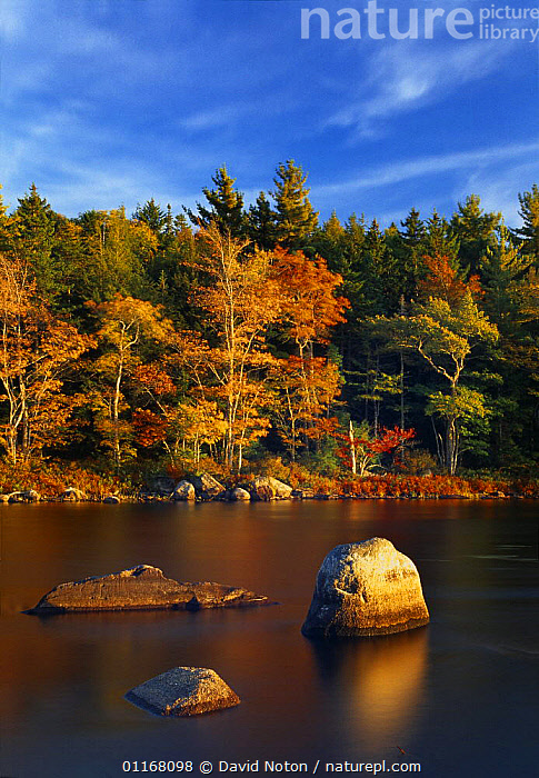 Autumn, Mersey River nr Kejimkujik National Park, Nova Scotia, Canada  ,  AUTUMN,CANADA,COUNTRYSIDE,FORESTS,LANDSCAPES,NORTH AMERICA,REFLECTIONS,RIVERS,ROCKS,STILL,TREES,VERTICAL,WOODLANDS,Plants  ,  David Noton