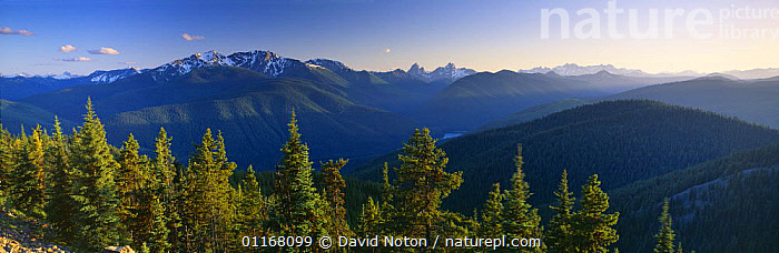 A view of the Cascade Mountains, Manning Provincial Park, British Columbia, Canada  ,  CONIFERS,EVERGREENS,FORESTS,LANDSCAPES,MOUNTAINS,NORTH AMERICA,PANORAMIC,SNOW,TREES,WOODLANDS,Plants  ,  David Noton