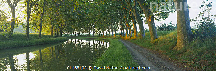 Tow path on the tree lined Canal du Midi nr Carcassonne, Languedoc, France  ,  CANALS,COUNTRYSIDE,EUROPE,LANDSCAPES,PANORAMIC,PATHWAY,PEACEFUL,REFLECTIONS,TOWPATH,TRAVEL,TREES,WATER,WATERWAY,Concepts,Plants  ,  David Noton