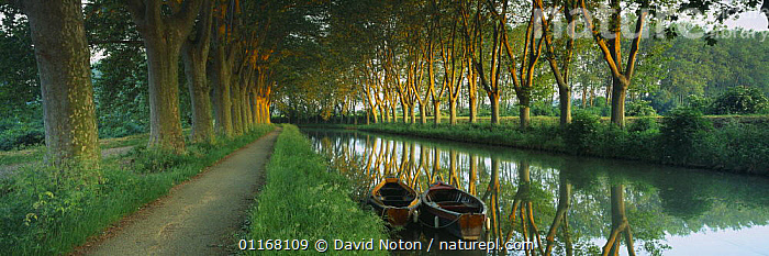 Traditional boats and tow path on the tree lined Canal du Midi nr Carcassonne, Languedoc, France  ,  BOATS,CANALS,COUNTRYSIDE,EUROPE,LANDSCAPES,PANORAMIC,PATHS,PATHWAY,PEACEFUL,REFLECTIONS,RURAL,TOWPATH,TRANQUIL,TREES,WATER,WATERWAY,Concepts,Plants  ,  David Noton