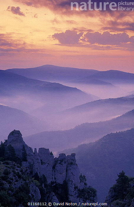 Dawn over the Cevennes, Nr Florac, France  ,  ATMOSPHERIC,CLOUDS,DAWN,EUROPE,FORESTS,HILLSIDE,LANDSCAPES,MIST,MOUNTAINS,PEACEFUL,SKY,STILL,SUNRISE,SUNSET,TREES,VALLEYS,VERTICAL,Concepts,Weather,Plants  ,  David Noton