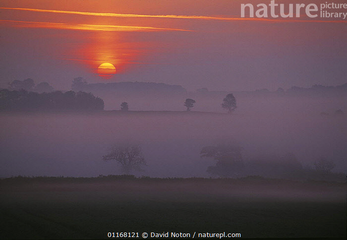 Misty dawn nr Charlton Horethorne, Somerset, UK  ,  ATMOSPHERIC,COUNTRYSIDE,EUROPE,FARMLAND,FIELDS,LANDSCAPES,MIST,PEACEFUL,SUNRISE,UK,United Kingdom,Concepts,British,ENGLAND  ,  David Noton