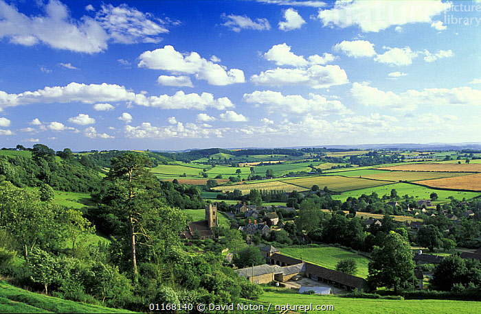 Rolling English Countryside, Corton Denham, Somerset, England, UK  ,  CLOUDS,COUNTRYSIDE,EUROPE,FARMLAND,FIELDS,LANDSCAPES,RURAL,TREES,UK,VILLAGES,United Kingdom,Weather,Plants,British,ENGLAND  ,  David Noton
