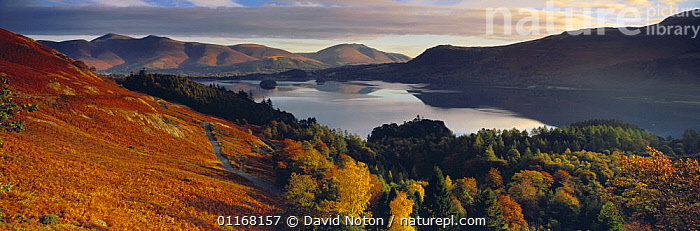 Derwentwater and Skiddaw in autumn, Lake District National Park, Cumbria, England, UK  ,  EUROPE,LAKES,LANDSCAPES,PANORAMIC,REFLECTIONS,RESERVE,TREES,UK,WOODLANDS,United Kingdom,Plants,British,ENGLAND  ,  David Noton
