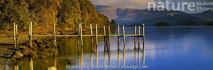 Derwentwater and Skiddaw from Brandelhow Bay in the autumn, Lake District National Park, Cumbria, England, UK  ,  EUROPE,JETTY,LAKES,LANDSCAPES,PANORAMIC,RESERVE,TREES,UK,WATER,United Kingdom,Plants,British,ENGLAND  ,  David Noton