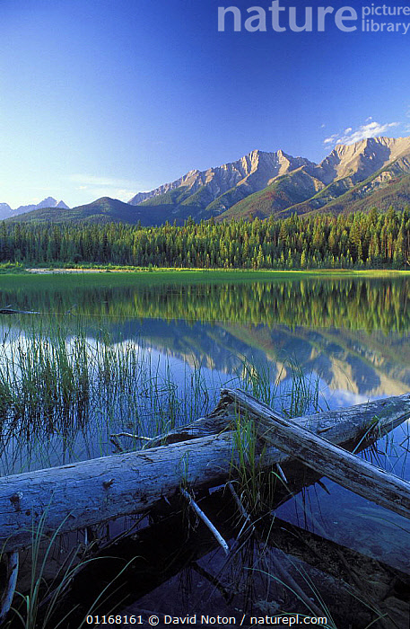 Dog Lake, Kootenay National Park, Canadian Rockies, British Columbia, Canada  ,  LAKES,LANDSCAPES,MOUNTAINS,NORTH AMERICA,PEACEFUL,REFLECTIONS,RESERVE,TRUNKS,VERTICAL,WATER,Concepts,,Canadian Rocky Mountain Parks World Heritage Site, UNESCO World Heritage Site,Rocky Mountains,Rockies,  ,  David Noton