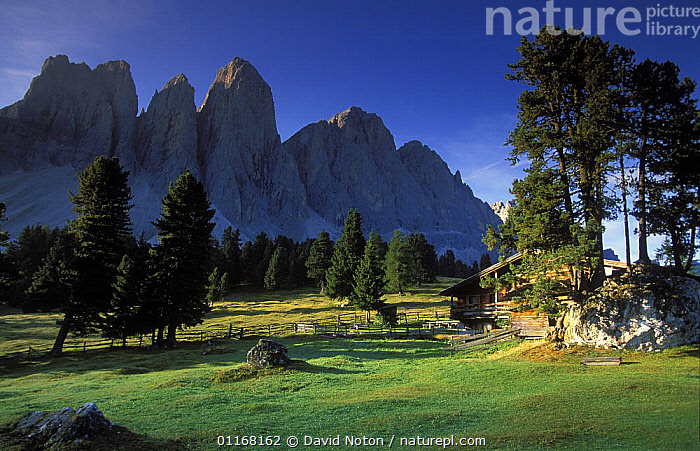 Alpine hut and Dolomites in Val di Fassa, Dolomites, Italy  ,  ALPINE,BUILDINGS,COUNTRYSIDE,EUROPE,ITALY,LANDSCAPES,MOUNTAINS,TREES,Plants  ,  David Noton