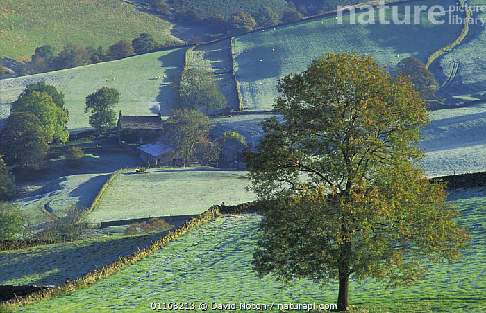Farmland nr Macclesfield, Peaks District National Park, Cheshire, UK  ,  AGRICULTURE,BUILDINGS,COUNTRYSIDE,EUROPE,FARMLAND,FIELDS,HEDGEROWS,LANDSCAPES,RESERVE,TREES,UK,United Kingdom,Plants,British,ENGLAND  ,  David Noton