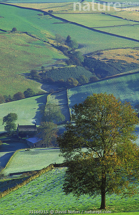 Farmland nr Macclesfield, Peak District National Park, Cheshire, UK  ,  COUNTRYSIDE,EUROPE,FARMLAND,FIELDS,LANDSCAPES,UK,VERTICAL,United Kingdom,British,ENGLAND  ,  David Noton