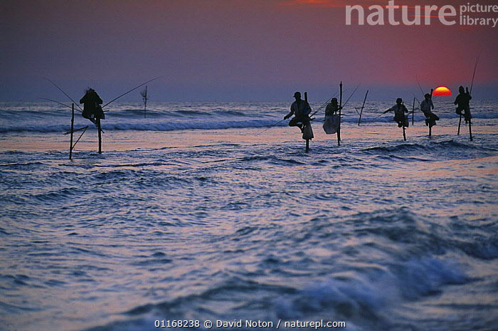 Stilt fisherman at dusk, Unawatuna, nr Galle, Sri Lanka  ,  ASIA,COASTS,FISHING,LANDSCAPES,PEOPLE,SUN,SUNSET,TRADITIONAL,WATER,WAVES,INDIAN-SUBCONTINENT  ,  David Noton