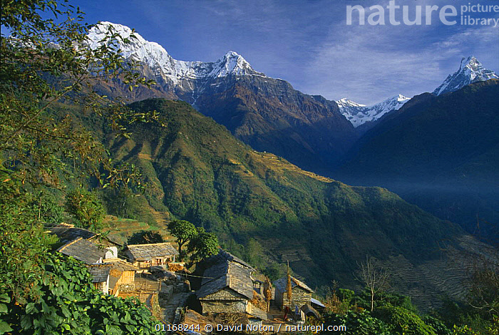 Farmstead in Ghandruk, with Annapurna on the left and Machhauchhre on the right, Himalayas, Nepal  ,  ASIA,BUILDINGS,LANDSCAPES,MOUNTAINS,NEPAL,SNOW  ,  David Noton