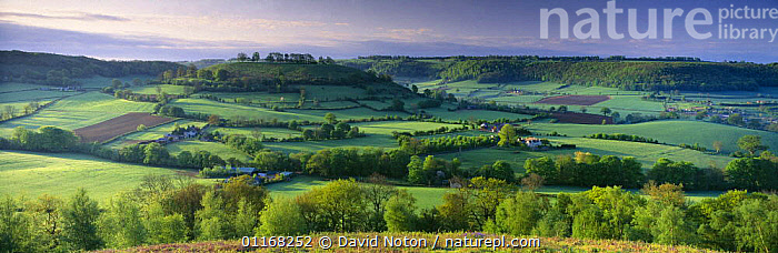 The Cotswolds nr Uley, from Cam Long Down, Gloucestershire, England, UK  ,  COUNTRYSIDE,EUROPE,FARMLAND,FIELDS,LANDSCAPES,PANORAMIC,TREES,UK,United Kingdom,Plants,British,ENGLAND  ,  David Noton