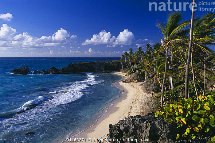 Figures on the beach at Harrismith beach, South East Coast, Barbados  ,  BEACHES,CARIBBEAN,COASTS,LANDSCAPES,PALMS,WAVES,WIND,West Indies,Weather,LESSER ANTILLES  ,  David Noton