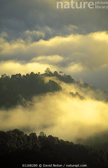 The forest clad peaks of Northern Thailand through a sea of mist, Huay Nam Dang National Park, Thailand  ,  ATMOSPHERIC,CLOUDS,FORESTS,HILLS,LANDSCAPES,MIST,SOUTH EAST ASIA,TREES,VERTICAL,Asia,Weather,Plants,SOUTH-EAST-ASIA  ,  David Noton