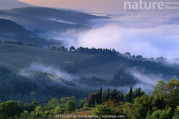 Misty morning near Montepulciano, Tuscany, Italy  ,  COUNTRYSIDE,EUROPE,HILLS,ITALY,LANDSCAPES,MIST,PEACEFUL,SUNRISE,TREES,VALLEYS,Concepts,Plants  ,  David Noton