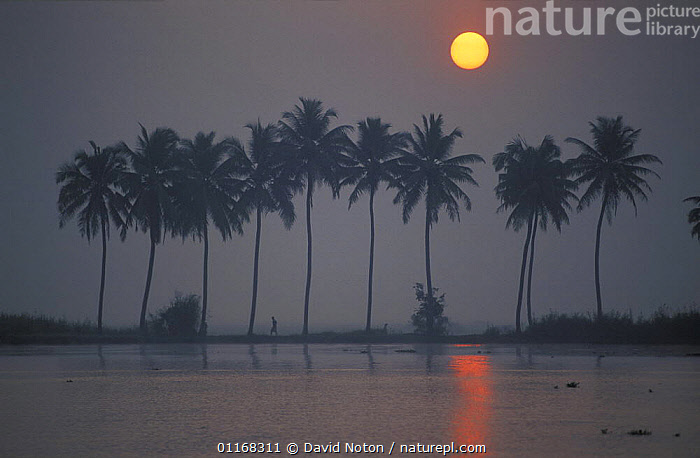 Dawn on the Backwaters, Kerala, India  ,  ASIA,LANDSCAPES,PALMS,REFLECTIONS,SILHOUETTES,SUN,SUNRISE,TREES,WATER,Plants,INDIAN-SUBCONTINENT  ,  David Noton