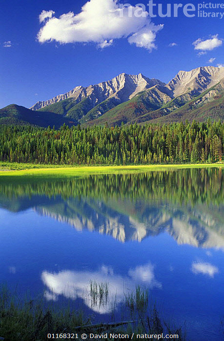 Dog Lake, Kootenay National Park, British Columbia, Canada  ,  CANADA,FORESTS,LAKES,LANDSCAPES,MOUNTAINS,NORTH AMERICA,PINES,REFLECTIONS,TREES,VERTICAL,WATER,Plants,,Canadian Rocky Mountain Parks World Heritage Site, UNESCO World Heritage Site,Rocky Mountains,Rockies,  ,  David Noton