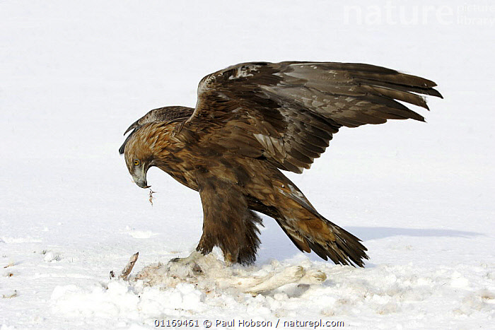 A Buzzard Standing On Trainers Hand