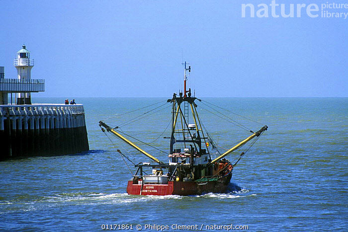 Fishing boat leaving harbour for the open sea, Ostend, Belgium  ,  BELGIUM,BOATS,EUROPE,FISH,FISHERIES,FISHING,HARBOURS,INDUSTRY,OCEANS,SHIPS  ,  Philippe Clement
