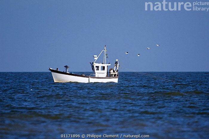 Prawner boat fishing for shrimps along the North Sea coast, Belgium  ,  BELGIUM,BOATS,EUROPE,FISH,FISHERIES,FISHING,INDUSTRY,OCEANS,SEABIRDS,SHRIMPS  ,  Philippe Clement