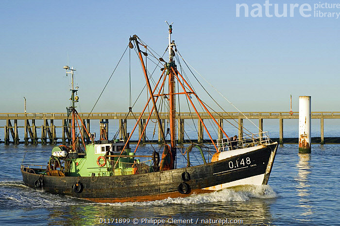 Prawner boat entering Ostend harbour, Belgium  ,  BELGIUM,BOATS,EUROPE,FISH,FISHERIES,FISHING,HARBOURS,INDUSTRY,MACHINERY,SHIPS  ,  Philippe Clement