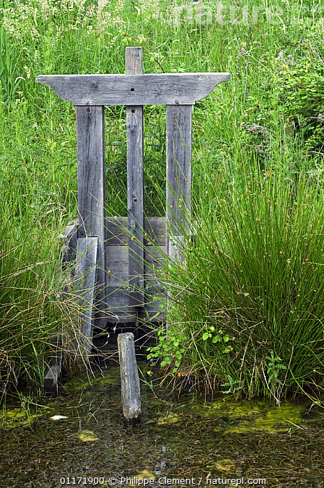 """Traditional wooden sluice, called """"bonde"""", used in fish-farming in La Brenne where the lakes are inter-connected in series, France  ,  EUROPE,FARMING,FISH,FISHING,FRANCE,GATES,GRASSES,LAKES,PONDS,TRADITIONAL,VERTICAL,WATER  ,  Philippe Clement"""