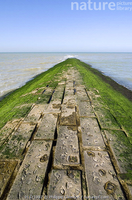 Breakwater covered in green seaweed (Cladophora rupestris) along the North Sea coast, Belgium  ,  ALGAE,BELGIUM,COASTS,EUROPE,GROYNES,MAN MADE,OCEANS,PLANTS,SEAWEEDS,STRUCTURES,VERTICAL,WATER  ,  Philippe Clement