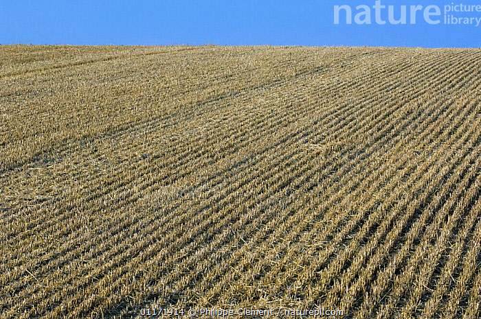 Stubble field after harvest, France  ,  ABSTRACT,AGRICULTURE,EUROPE,FARMLAND,FIELDS,FRANCE,HARVEST,LANDSCAPES,PATTERNS,ROWS  ,  Philippe Clement
