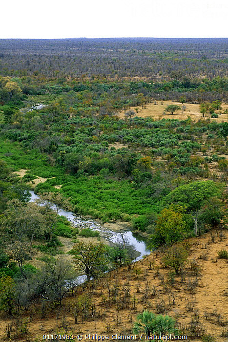 Lush riverine growth along river in the Kruger NP, South Africa  ,  AFRICA,KRUGER,LANDSCAPES,NP,RIVERS,SOUTH AFRICA,SOUTHERN AFRICA,TREES,VELDT,VERTICAL,WOODLANDS,Grassland,Plants,National Park  ,  Philippe Clement