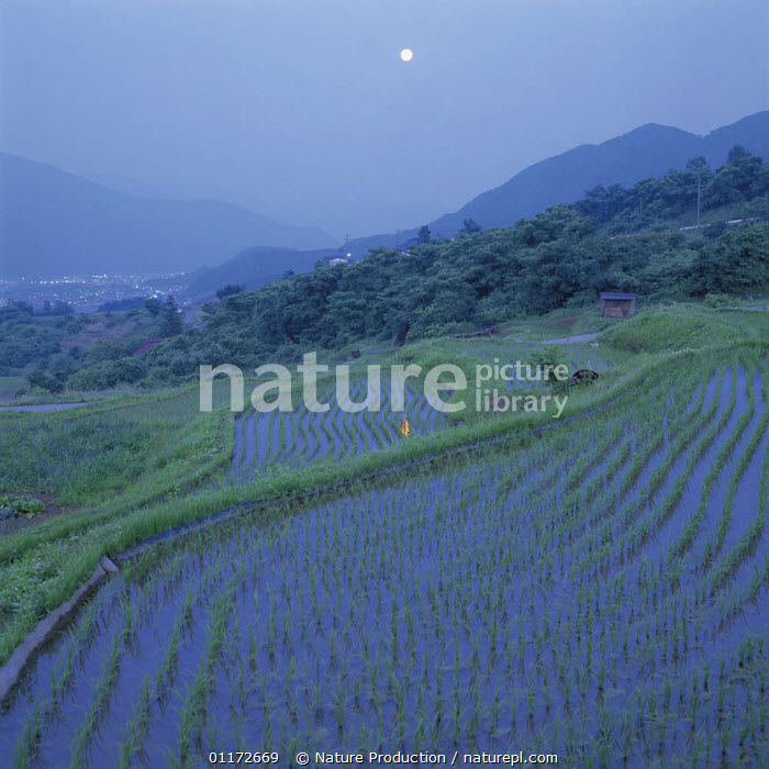 Reflection of moon in rice terrace, Nagano, Japan, AGRICULTURE,ASIA,CROPS,DAWN,JAPAN,LANDSCAPES,NIGHT,PADDY FIELDS,REFLECTIONS,TERRACED, Nature Production