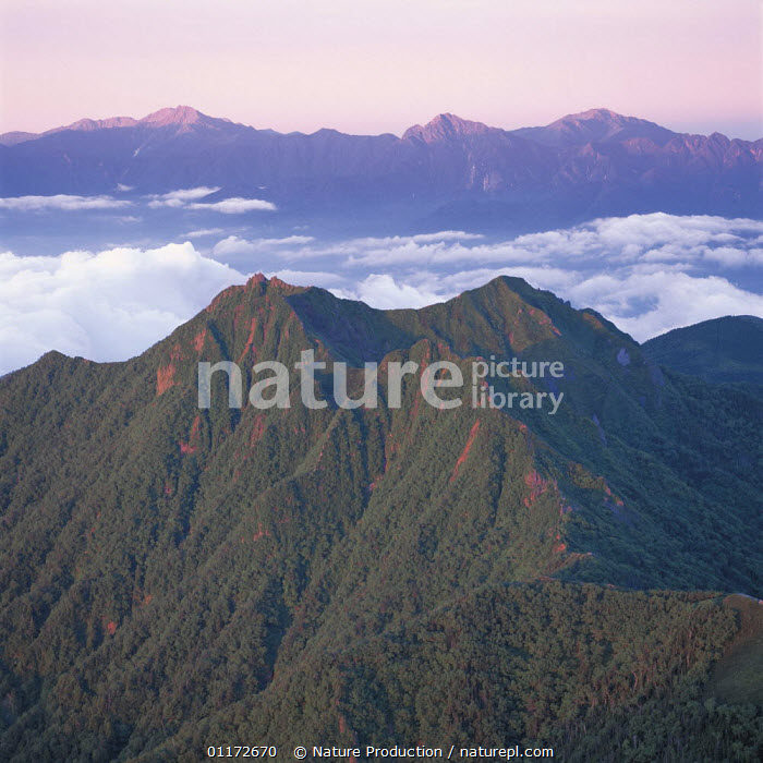 Mt. Gongendake and the Southern Alps at dawn, Nagano, Japan, ASIA,CLOUDS,LANDSCAPES,MOUNTAINS,RIDGE,SUMMIT,Weather, Nature Production