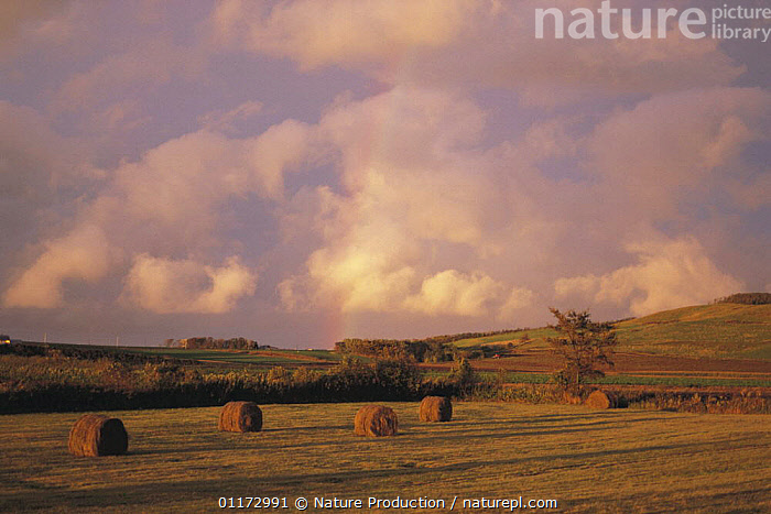 Field with hay bales and rainbow, Hokkaido, Japan, ASIA,CLOUDS,FARMLAND,JAPAN,LANDSCAPES,RAINBOWS,Weather, Nature Production