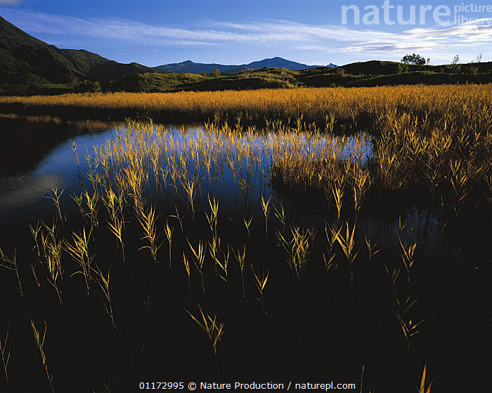 Lake in Shiretoko, Hokkaido, Japan, ASIA,HABITAT,JAPAN,LANDSCAPES,WETLANDS, Nature Production