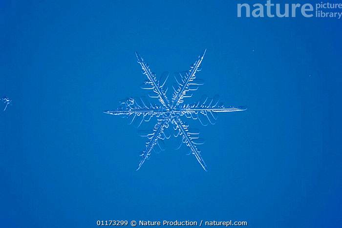 Snow crystal (photomicroscopy x 25), ICE,PATTERNS,SHAPES,SNOW,WEATHER, Nature Production