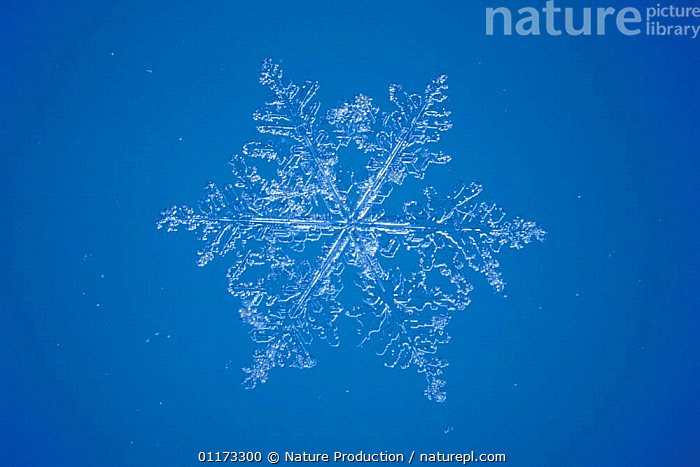 Snow crystal (photomicroscopy x 15), ICE,PATTERNS,SHAPES,SNOW,WEATHER, Nature Production
