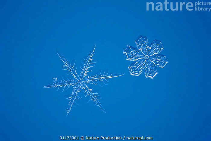 Snow crystal (photomicroscopy x 20), ICE,PATTERNS,SHAPES,SNOW,WEATHER, Nature Production