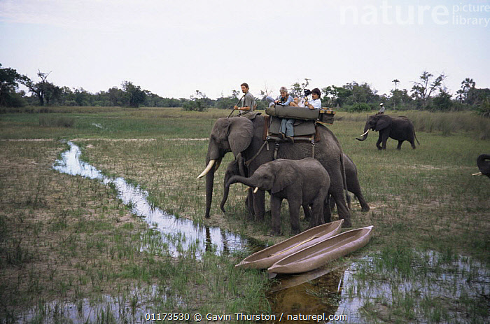 Film crew filming from African Elephant for BBC NHU 'Dawn to Dusk' in the Okavango Delta, Botswana, circa 1995, CAMERA,ELEPHANTS,PEOPLE,RESERVE,RIDING,SOUTHERN AFRICA,WETLANDS, Gavin Thurston