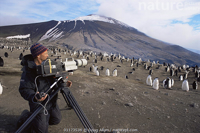 Camerman Doug Allan filming Chinstrap penguins for BBC NHU 'The Blue Planet'. Zavodovski Is, South Sandwich Is, with dormant volcano in background, 1997, ANTARCTIC,BIRDS,CAMERA,FILMING IN WILD,FLIGHTLESS,FLOCKS,LANDSCAPES,PENGUINS,PEOPLE,SUMMER,VOLCANOES,Geology, Doug Allan