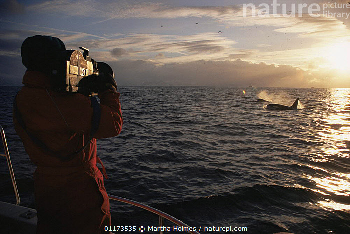 Doug Allan filming Killer whales surfacing at sunset for BBC NHU 'The Blue Planet'. Tysfjord, Norway, 1997, ARCTIC,BOATS,CAMERA,EUROPE,FILMING IN WILD,ORCA,PEOPLE,SUMMER,WHALE,Scandinavia, Martha Holmes