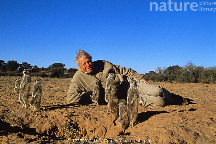 Sir David Attenborough on location with Meerkats / Suricates while filming for BBC NHU 'Life of Mammals' Southern Africa, 2000., DESERTS,GROUPS,LANDSCAPES,MAMMALS,MEERKAT,PEOPLE,PRESENTER,SOUTHERN AFRICA,SURICATE, Huw Cordey