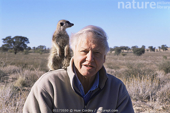 Sir David Attenborough on location with Meerkat / Suricate while filming for BBC NHU 'Life of Mammals' Southern Africa, 2000., DESERTS,LANDSCAPES,MAMMALS,PEOPLE,PRESENTER,SOUTHERN AFRICA , suricates , meerkats, Huw Cordey