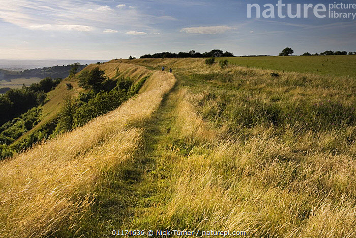 Iron age hill fort at Uley Bury on the Cotswold escarpment, Gloucestershire, England  ,  AGE,ANCIENT,ARCHAEOLOGY,COUNTRYSIDE,ENGLAND,EUROPE,FORTS,HILLS,IRON,LANDSCAPES,MONUMENTS,OLD,RUINS  ,  Nick Turner